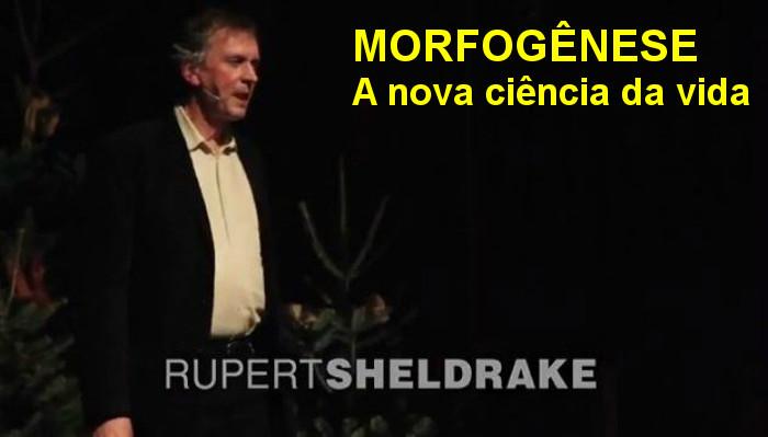 Resultado de imagem para campos mórficos rupert sheldrake