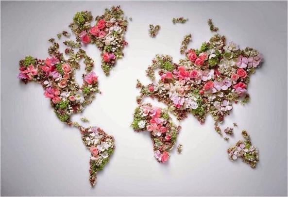 Resultado de imagem para imagens de flores e paz